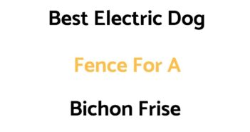 Best Electric Dog Fence For A Bichon Frise
