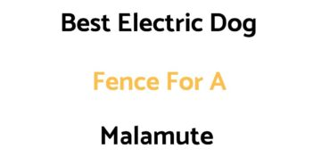 Best Electric Dog Fences For A Malamute