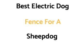 Best Electric Dog Fences For A Sheepdog