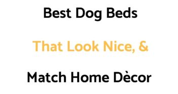 Best Dog Beds That Look Nice, & Match Home Dècor