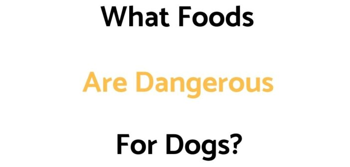 What Foods Are Dangerous For Dogs?