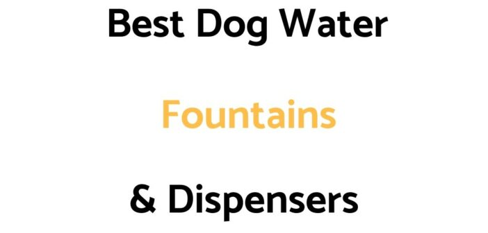 Best Dog Water Fountains & Dispensers