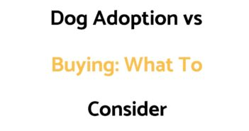 Dog Adoption vs Buying: Which Is Best, What Factors Should You Consider?