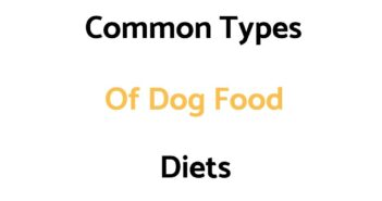 Common Types Of Dog Food Diets