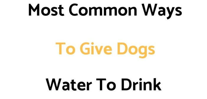 Most Common Ways To Give Dogs Water To Drink