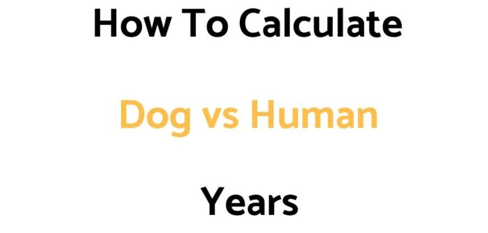 How To Calculate Dog To Human Years (Conversion Chart, & Calculator)