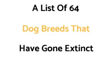 List Of Extinct Dog Breeds