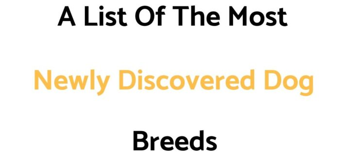 A List Of The Most Newly Discovered Dog Breeds (In The 21st Century)