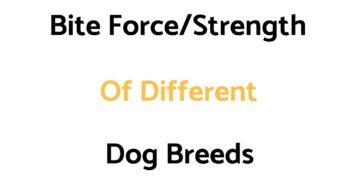 Bite Force (Strength) Of Different Dog Breeds, & A Comparison To Other Animal Species' & Humans