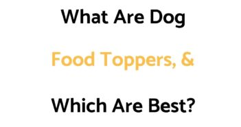 What Are Food Toppers For Dogs, & Which Are Best?