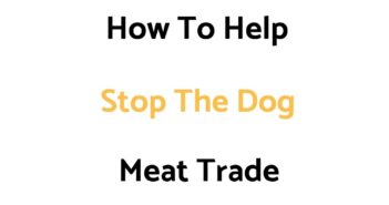 How To Help Stop The Dog Meat Trade (& What To Know About It)