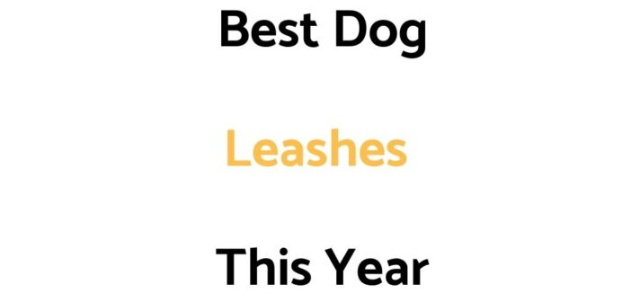 Best Dog Leashes In 2021/2022