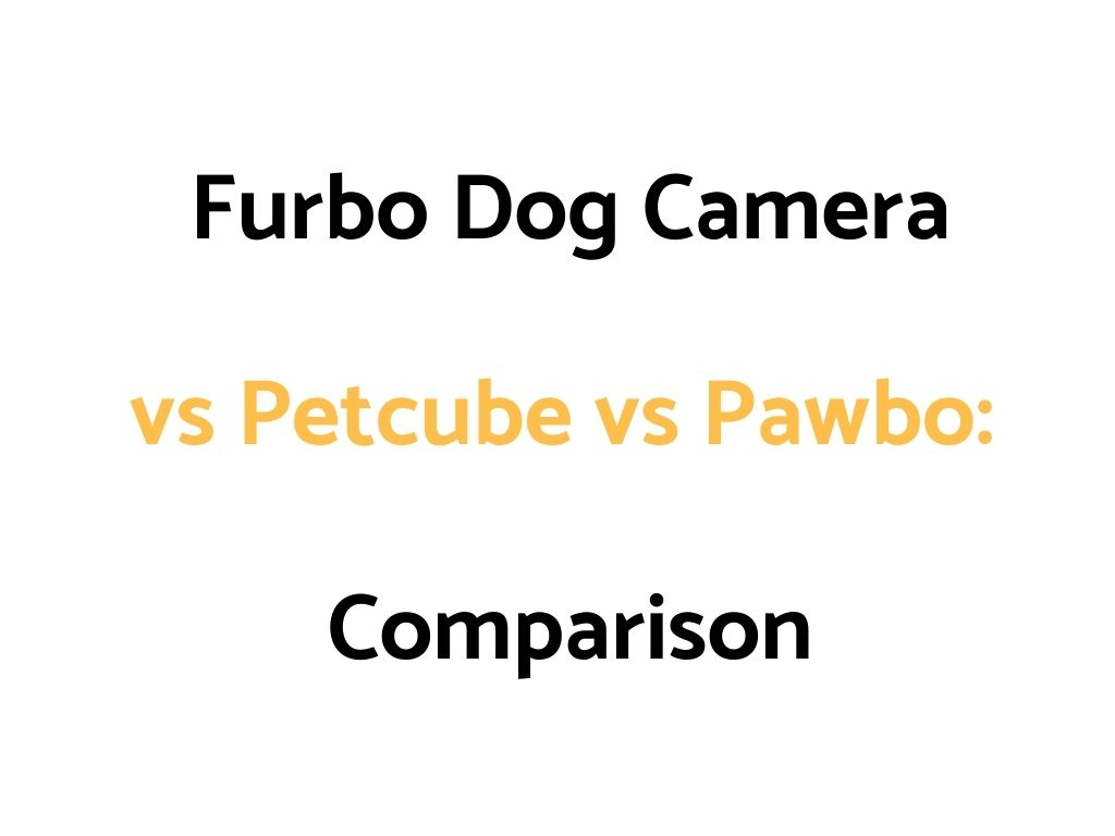 Furbo Dog Camera vs Petcube vs Pawbo: Comparison